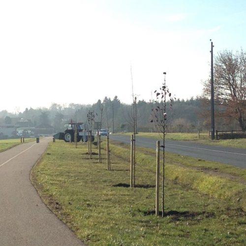 1000 arbres